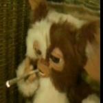 Gizmo's picture